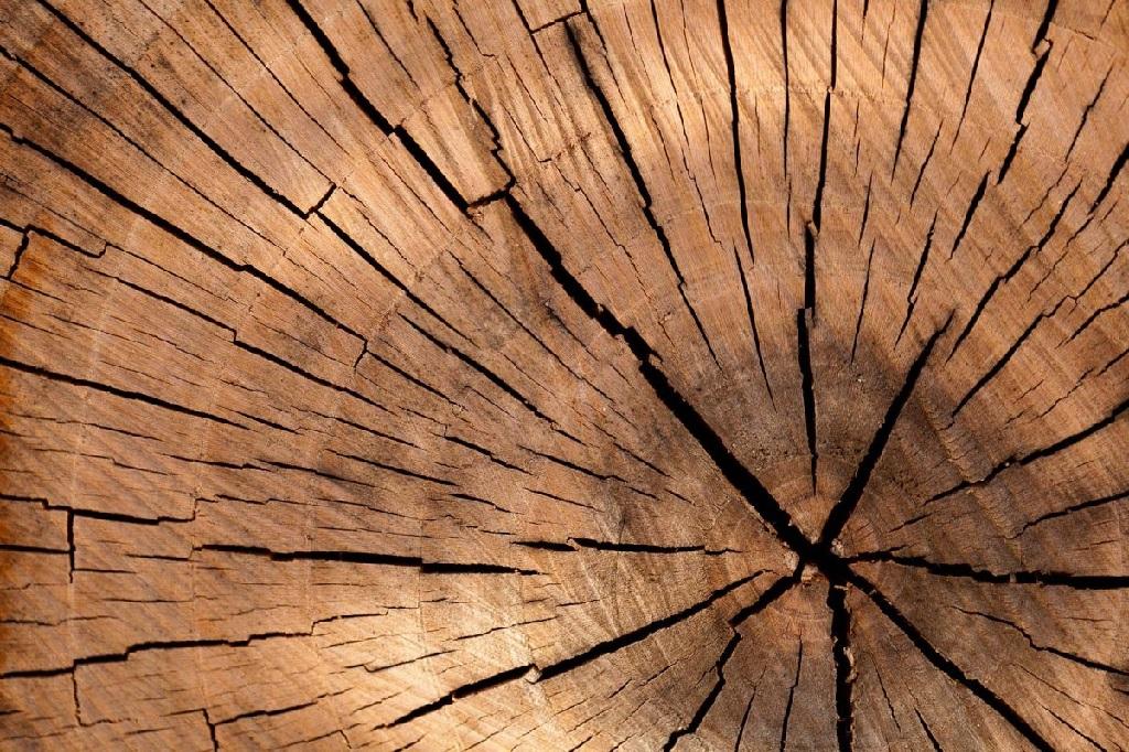 خرید تخته ون آمریکایی، خرید مرغوب ترین چوب ون