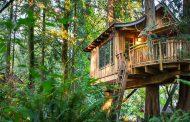 خانه های درختی شگفت انگیز
